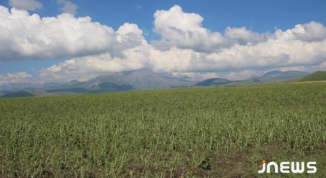 Сильный град повредил сельскохозяйственные угодья 14 сел в Ахалкалаки