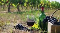 wine_tourism
